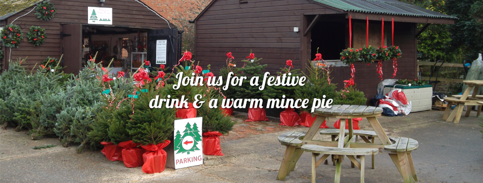 New farm christmas trees Warwickshire